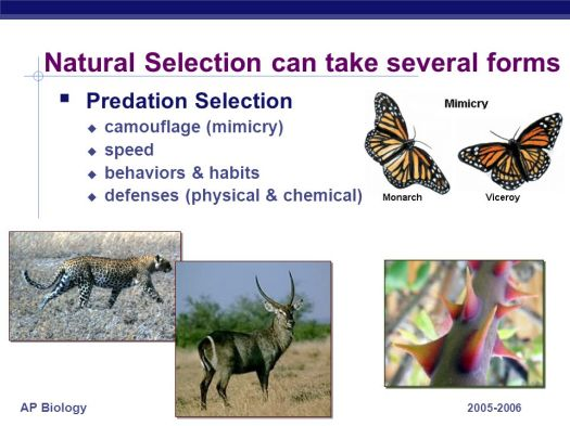 What Does Natural Selection Have To Do With Genetics